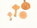 Hygrocybe  pratensis (Pers.:Fr.) Donk , Wiesen-Ellerling, Orange-Ellerling