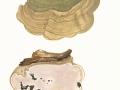 Ganoderma lipsiense (Batsch) G.F.Atk. , Flacher Lackporling