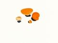 Aleuria aurantia (Pers.:Fr.) Fuck. , Orangebecherling