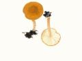 Lepiota boudieri Bres. , Fuchsbräunlicher Schirmling , Orangebrauner Schirmling