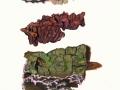 Chondrostereum purpureum (Pers.:Fr.) Pouzar , Violetter Knorpelschichtpilz