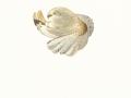Coprinus atramentarius  (Bull.:Fr.) Fr. , Grauer Falten-Tintling