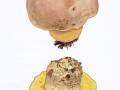 Boletus radicans  Pers.:Fr. , Wurzelnder Bitter-Röhrling , NPH
