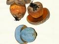 Boletus rubrosanguineus Cheype 2, Falscher Satans-Röhrling