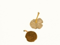 Craterellus tubaeformis (Bull.:Fr.) Quél.. , Trompetenpfifferling