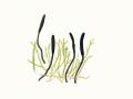 Geoglossum umbratile Sacc. , Schwarze Erdzunge
