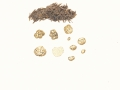 Tuber puberulum Berk. & Broome , Flaumhaarige Zwergtrüffel , Rundsporige Trüffel