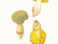 Xerocomus submentosus (L.: Fr.) Quél. , Ziegenlippe