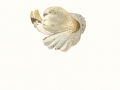 Coprinopsis atramentaria  (Bull.) Redhead et al.  , Grauer Falten-Tintling
