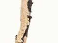 Schizopora paradoxa (Schrad.:Fr.) Donk , Veränderlicher Spaltporling