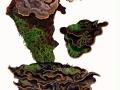 Amylostereum areolatum (Chaillet in Fr.) Boid. , Fichten-Schichtpilz , NPH
