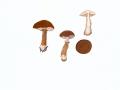 Cystoderma granulosum (Batsch:Fr.) Fayod , Rostroter KörnchenschirmlingNPH