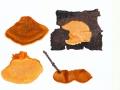 Pycnoporellus fulgens (Fr.) Donk , Leuchtender Weichporenschwamm , Leuchtender Orangeporling , NPH