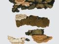 Skeletocutis nivea (Jungh.) Keller , Engporiger Knorpelporling , Weißer Knorpelporling