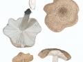 Tricholoma argyraceum (Bull.:Fr.) Gill. , Gilbender Erd-Ritterling