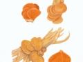 Phyllotopsis nidulans (Pers.:Fr.) Singer , Orangeseitling , NPH