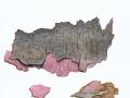 Tulasnella violea (Quél.) Bourdot & Galzin , Lilafarbene Wachskruste , NPH