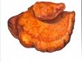 Inonotus hispidus (Bull.: Fr.) Karst. , Zottiger Schillerporling