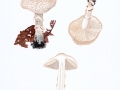 Lepiota clypeolaria