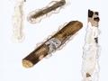 Meruliopsis corium (Pers.: Fr.) Ginns , Gemeiner Lederfältling
