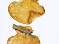 Piptoporus quercinus