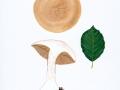 Cortinarius anserinus, 1