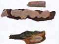 Phellinus ferreus (Pers.) Bourdot & Galzin , Scmalsporiger Feuerschwamm