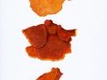 Pycnoporellus fulgens (Fr.) Donk , Leuchtender Weichporling ,  NPH