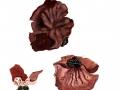 Gyromitra ancilis