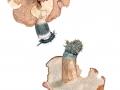 Hydnellum glaucopus 1