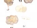 Melanoleuca subpulverulenta  (Pers.) Sing. , Bereifter Weichritterling