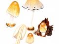 Coprinellus domesticus (Bolton: Fr.) Vilgalys et al. , Großer Holz-Zystidentintling