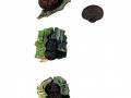 Daldinia petriniae Y.M.Ju et al. , Erlen-Kugelpilz, Erlen-Holzkohlenpilz