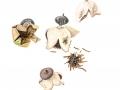 Geastrum pectinatum Pers: Pers. , Kamm-Erdstern