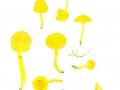 Hygrocybe ceracea (Wulfen: Fr.) Kumm. , Brüchiger Saftling , Zerbrechlicher Gold-Saftling
