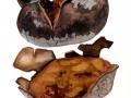 Mycenastrum corium (Guers.) Desv. , Sternstäubling