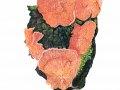 Phlebia tremellosa  (Schrad.: Fr.) Nakasone , Gallertfleischiger Fälting
